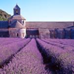 Home Language International Destination - France