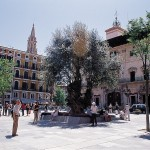 Spanish Courses in Palma de Mallorca