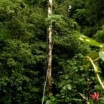 Canopy Tour COSI Costa Rica